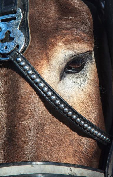 New Orleans Mule