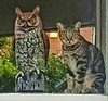 This feral cat loves to sit by this wooden owl in a mobile home park in Riverside, CA