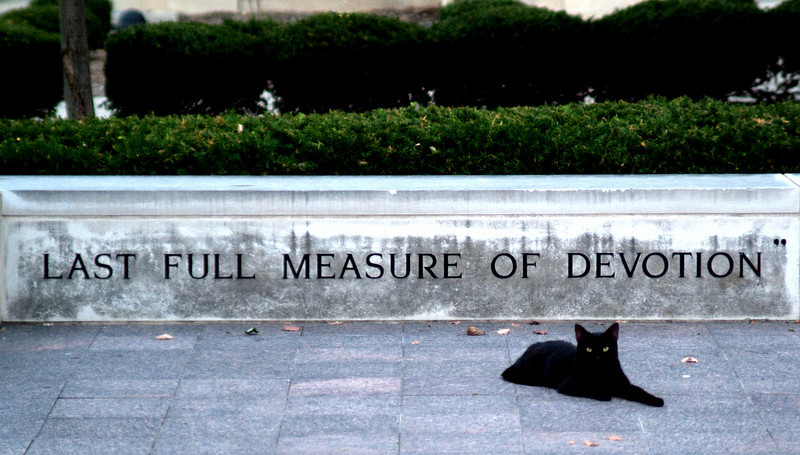 I photographed this cat in downtown Noblesville on the courthouse square.  He was truly a noble animal!