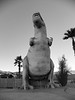 Cabazon T-Rex - black and white