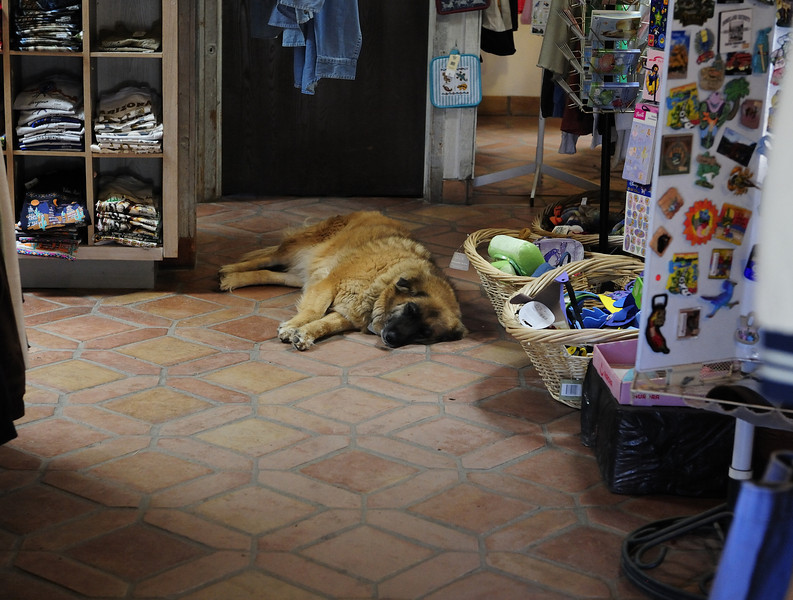 The old shop dog.  Tubac, Arizona