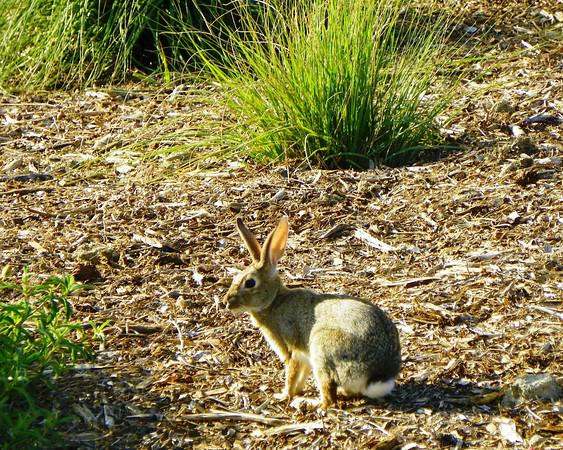 Cemetery Rabbit