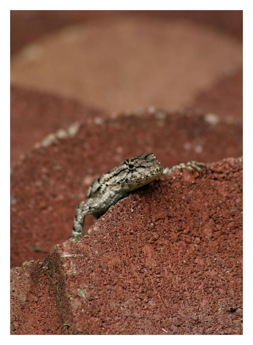My porch lizard