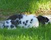 B & W Rabbit in the Grass