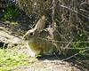 Bunny in the Wetlands