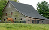 Horse grazing in front of 19th Century barn.