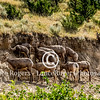 Bighorns Gates of the Mountain, Montana