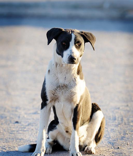 Stray dog.  San Xavier Indian Reservation. Arizona.