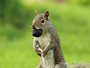squirrel2434