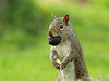 squirrel2437