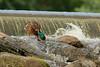 duck6748