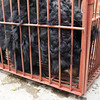 "Manuka was stressed and frantic as she was taken off the truck. The team quickly ascertained she was not in immediate need of medical attention, and she was taken straight to quarantine so she could calm down.<br /> <br /> All print proceeds go to Animals Asia, who rescued these moon bears.<br />  <a href=""http://www.animalsasia.org"">http://www.animalsasia.org</a>"