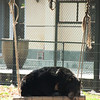"Swings and roundabouts at the Animals Asia Bear Rescue Centre in Chengdu, China. This lucky bear no longer has a care in the world. <br /> <br /> All proceeds go to Animals Asia, who rescued this sleeping beauty.<br /> <a href=""http://www.animalsasia.org/"">http://www.animalsasia.org/</a>"