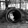 """A moon bear hiding from the camera in the special care habitat at the Animals Asia Bear Rescue Centre in Chengdu, China.<br /> <br /> All proceeds go to Animals Asia, who rescued this camera-shy bear.<br /> <a href=""""http://www.animalsasia.org/"""">http://www.animalsasia.org/</a>"""