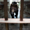 """Brown bear Stan gets added to the list of Things That Have Tried To Eat My Camera.<br /> <br /> All proceeds go to Animals Asia, who rescued Stan.<br /> <br /> <a href=""""http://www.animalsasia.org/"""">http://www.animalsasia.org/</a>"""