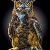 Night Owl 6005 w53