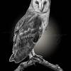 Barn Owl 6357 w59