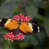 Tiger Moth  6947 w28