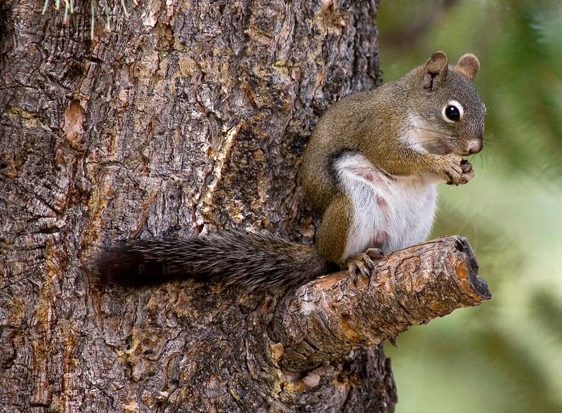 Squirrel 0875