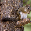 Squirrel 0875