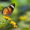 Butterfly  6860 w28