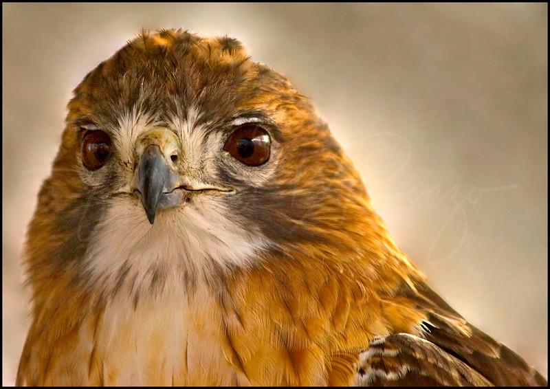 Falcon 1550