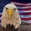 American Breed 5682 w52