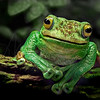 Smiling Froggie