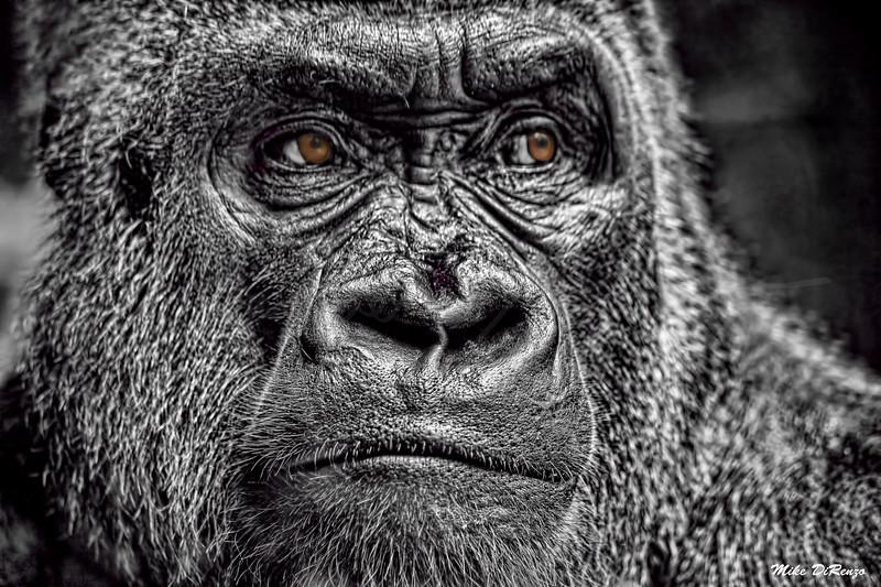 Big Ape 0330 w29