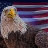 American Pride  5747 w52
