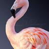 Flamingo 2167 w34