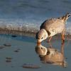 Sandpiper Reflection 8566