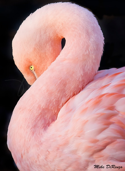 Pretty in Pink  2178 w33