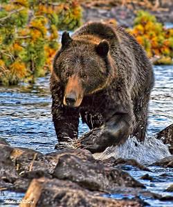 Grizzly 5948 w53