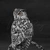 Night Owl 6146 w60