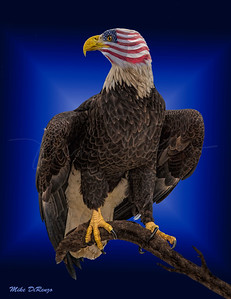 True American Eagle 5673 w52