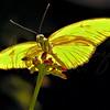 Butterfly 1705