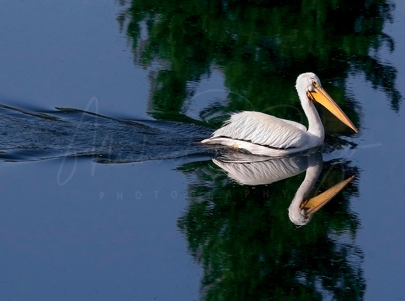 Pelican Reflection 5300
