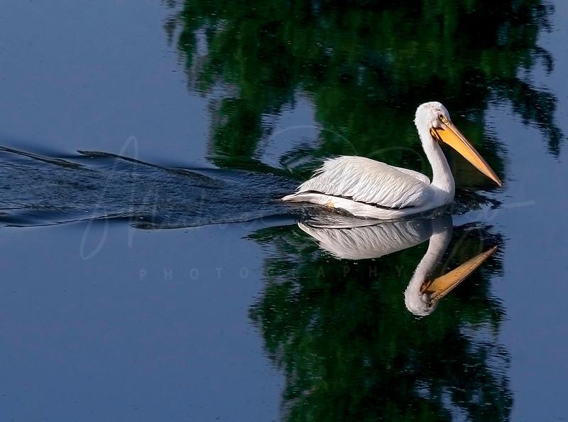 Pelican Reflection 5300