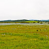 "Another ""lake"" of Camas in bloom on the Weippe Prairie"