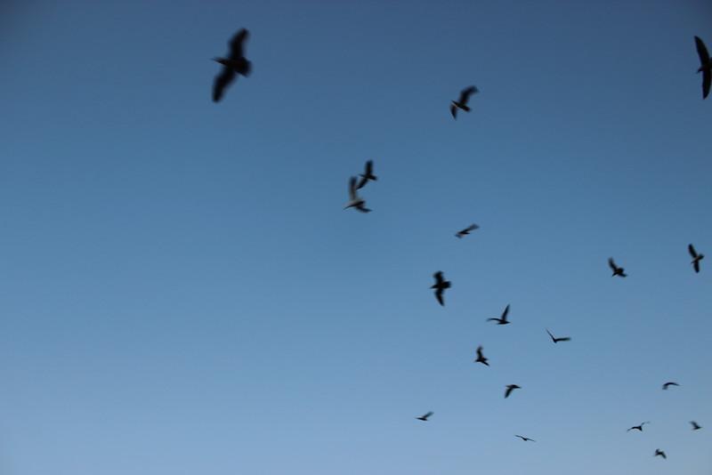 Final Flight at Sundown