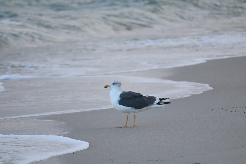 Seagull Watches the Waves