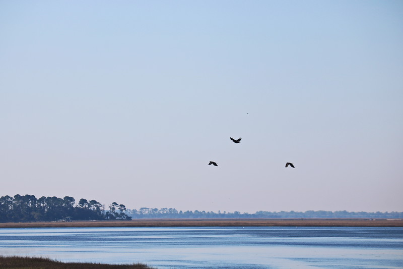 Pelicans Fly over Wetlands