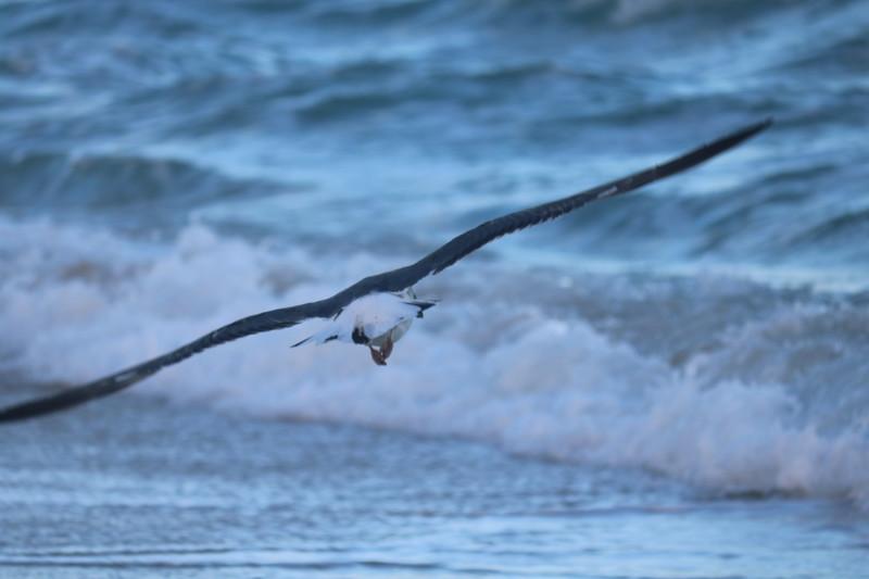 Seagull Surveys the Surf