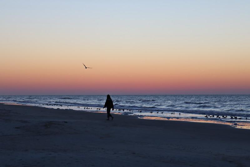 Waterbirds at Dawn