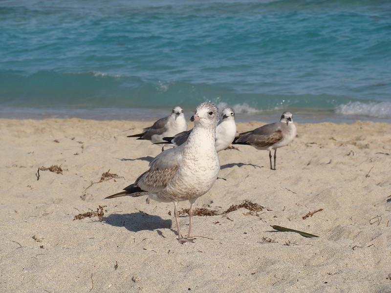 Seagulls Seagulls on the Beach