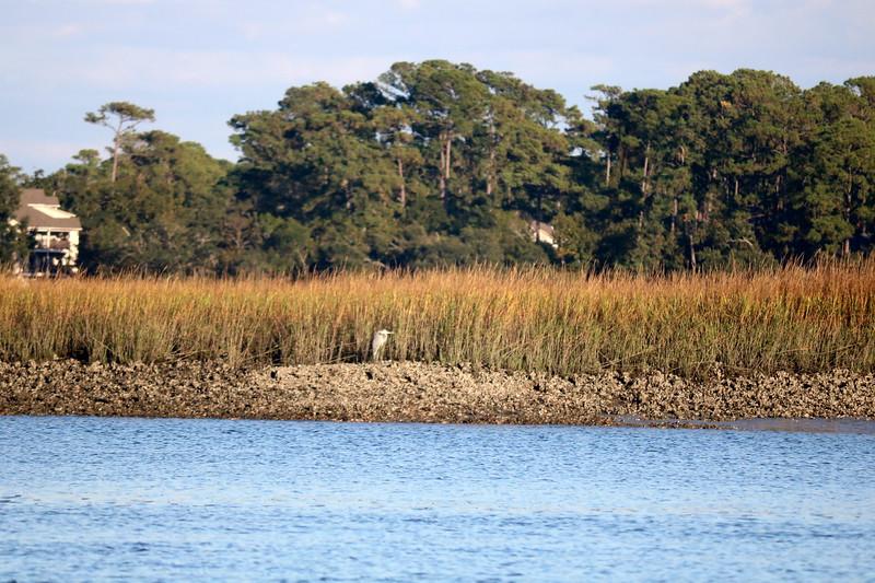 Egret at the Shore