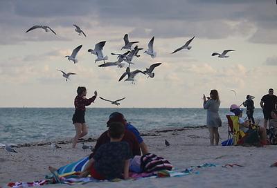 Seagulls Flock at Dusk