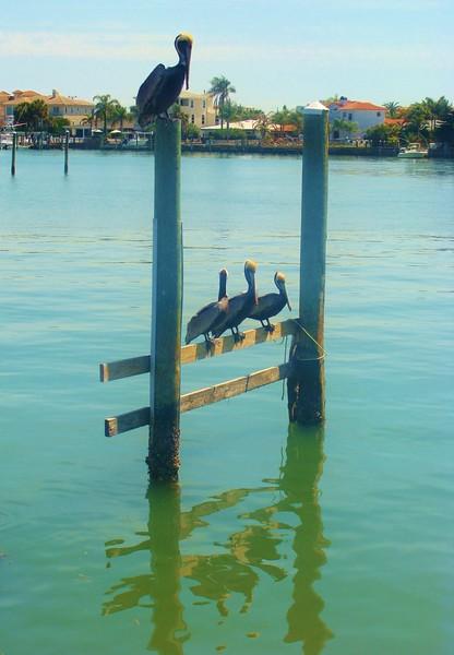 Four Pelican