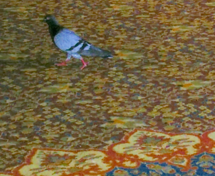 Pigeon Attends a Conference